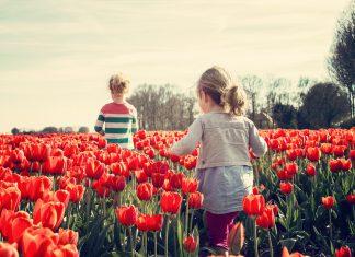 אטרקציות בצפון – מגוון אטרקציות מהנות לכל המשפחה