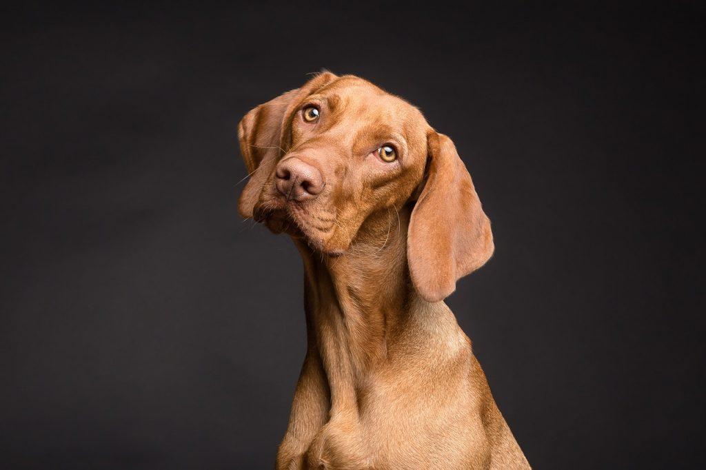 הווטרינר של עיריית עכו קורא לתושבים לחסן את כלביהם נגד כלבת