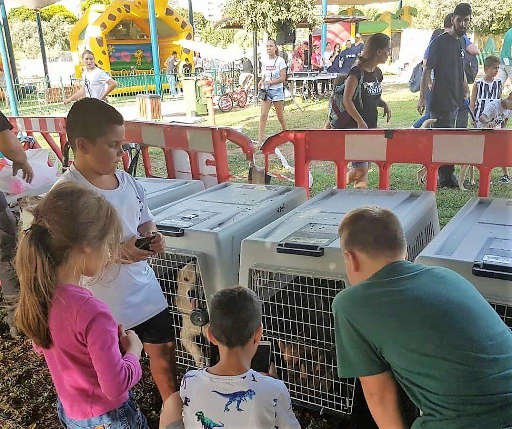 11 כלבים מצאו בית חם בפסטיבל כלבים