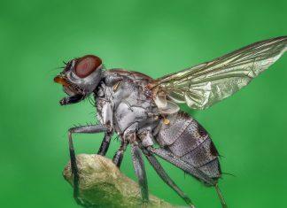 3 חרקים ומעופפים מטרידים – ואיך תיפטרו מהם?