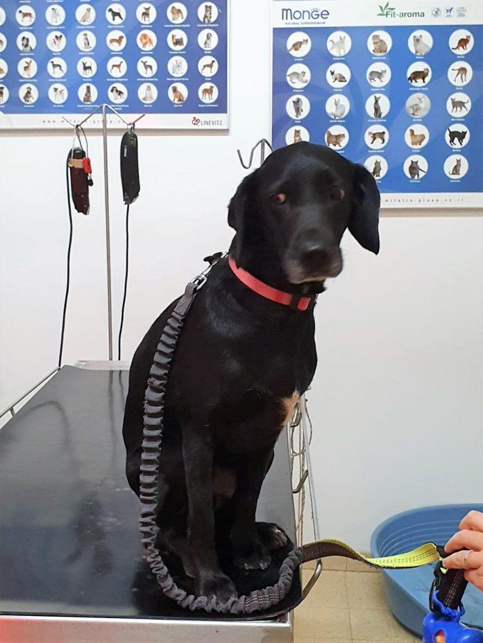 כבר 65 כלבים שבעליהם ניצלו את המבצע