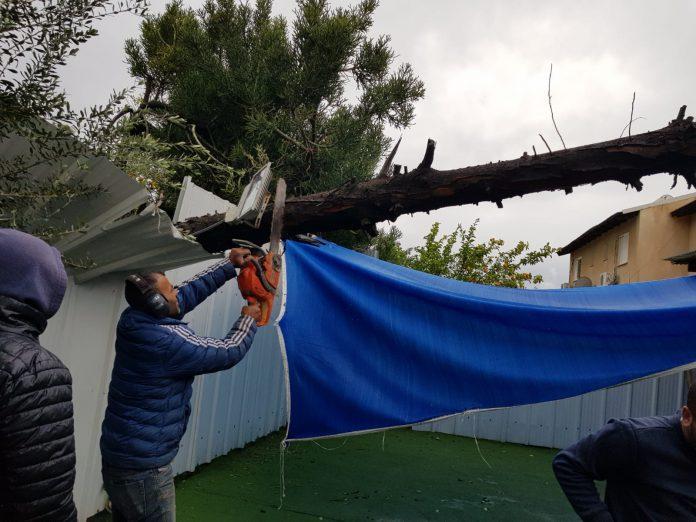 מבצע לכריתת עצים מסוכנים בעפולה