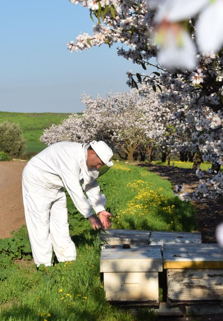 למרות משבר הקורונה לקראת חג הפסח והמימונה לא יהיה מחסור בדבש!