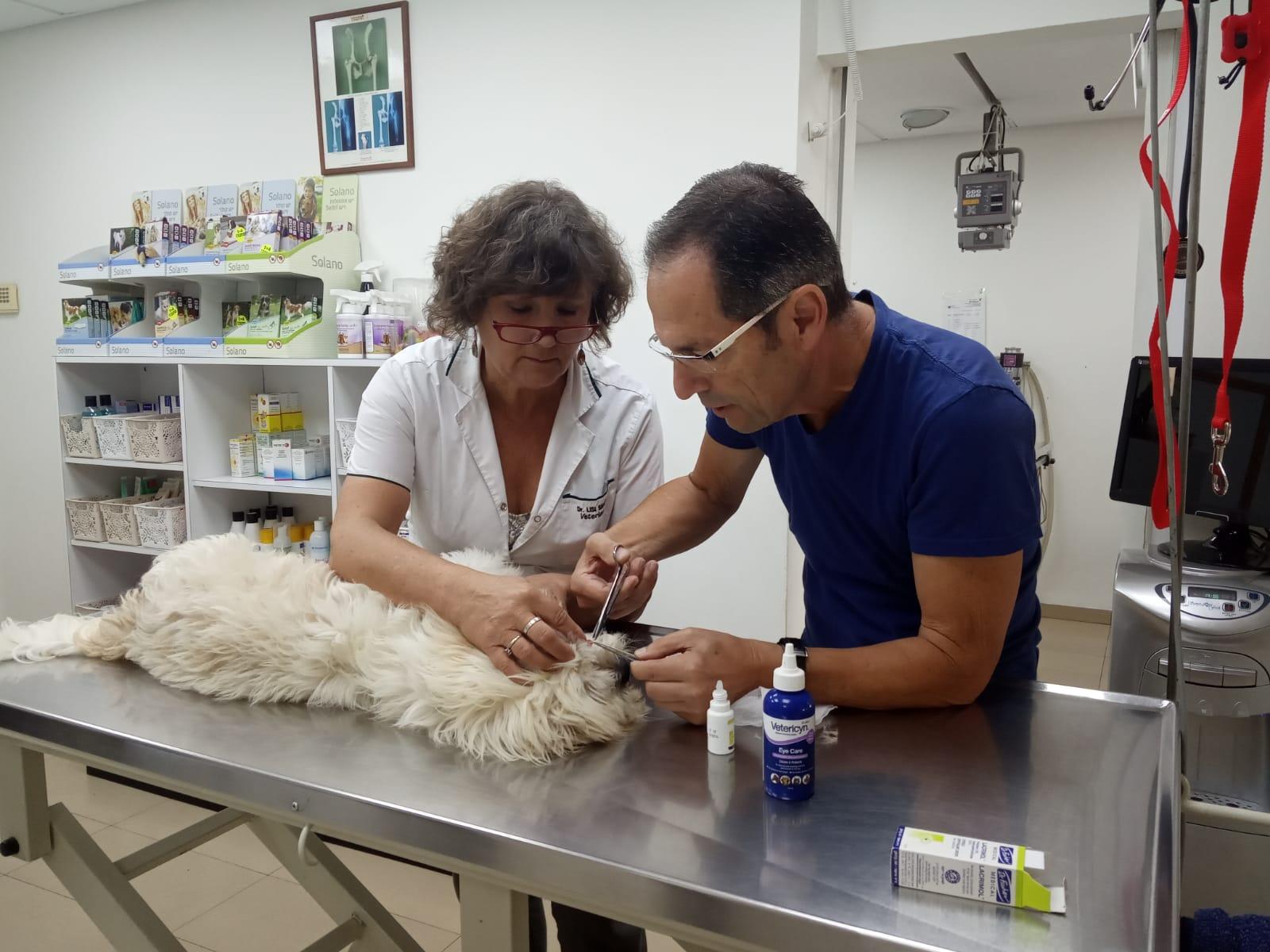 עיקור וסירוס ללא עלות לכלבים