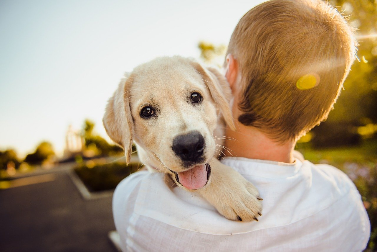 מבצע לעיקור וסירוס כלבים בעכו ללא עלות