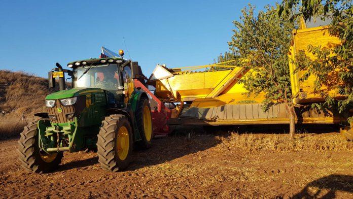 העונה בישראל יבול רב של שקד 7,500 טון