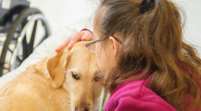 רמת חיפה מובילים בשימוש בטיפול בחיות ככלי טיפולי